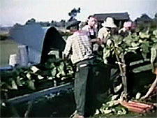 Tobacco Tying Machine Video